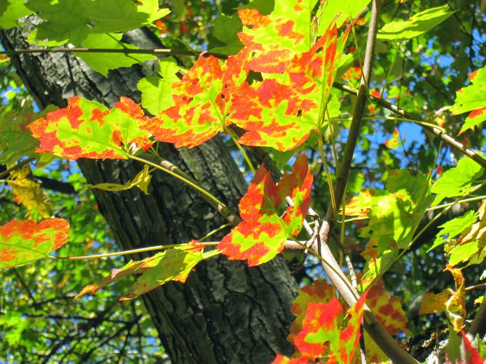 Evènement d'automne au Pouces Verts Montessori